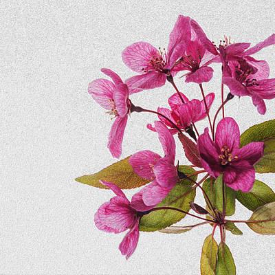 Manipulation Photograph - Pink Spring Flowers by Vishwanath Bhat