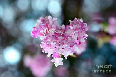 Pink Spring Heart Art Print by Sabine Jacobs
