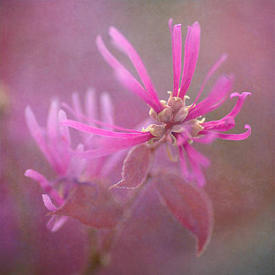 Photograph - Pink Squared 2 by Fraida Gutovich