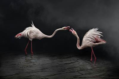 Flamingos Photograph - Pink Strategy by Martine Benezech