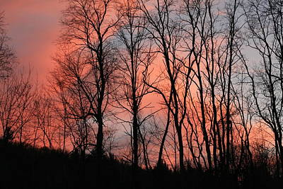 Locust Sunset Photograph - Pink Sunset 009 by Nancy Scarcello