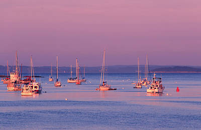 Photograph - Pink Sunset And Sailboats by Barbara West