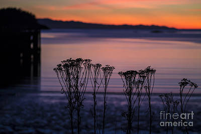Photograph - Pink Sunset by Arlene Sundby
