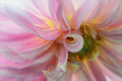 Photograph - Pink Swirl Glow by Mary Jo Allen