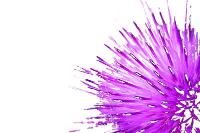 Pink Thistle  Art Print by Rich Collins