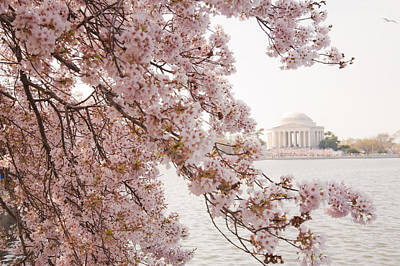 Photograph - Pink Tidal Basin by Dennis Ludlow