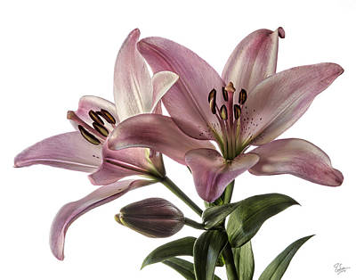 Photograph - Pink Tiger Lilies by Endre Balogh