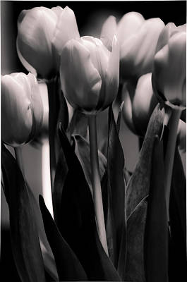 Art Print featuring the photograph Pink Toned Tulips by Craig Perry-Ollila