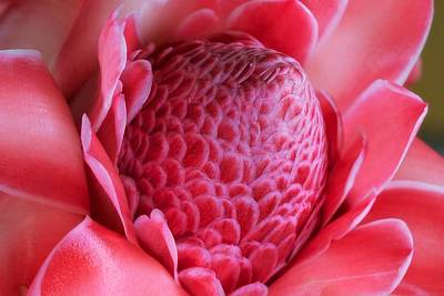 Floral Photograph - Pink Torch by Jade Moon