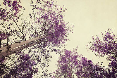 Wall Art - Photograph - Pink Trees by Priska Wettstein