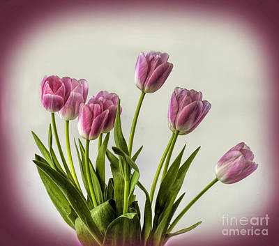 Photograph - Pink Tulip Bouquet by Shirley Mangini