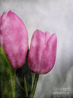 Photograph - Pink Tulips by Barbara Moignard