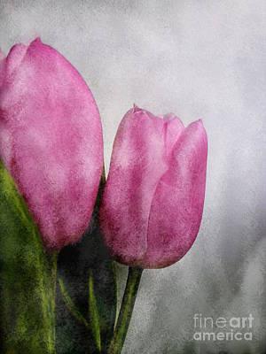 Photograph - Pink Tulips by Barbara Moignard