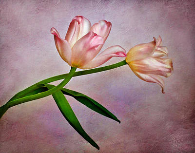 Photograph - Pink Tulips by David and Carol Kelly