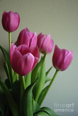 Photograph - Pink Tulips by Debra Fedchin