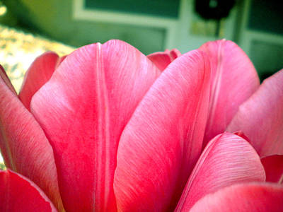 Pink Tulips Art Print by Elizabeth Fredette