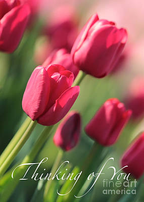 Tulips Photograph - Pink Tulips Thinking Of You Card by Carol Groenen