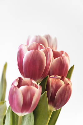 Photograph - Pink Tulips by Veli Bariskan