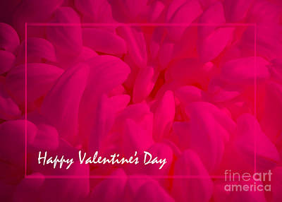 Photograph - Pink Valentine by Cheryl McClure