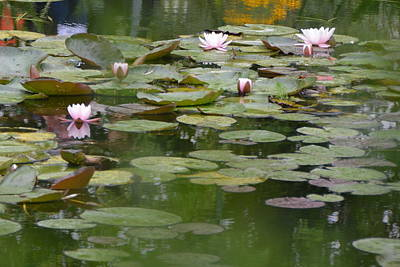 Photograph - Pink Water Lilies At Monet's Giverny Pond by Carla Parris
