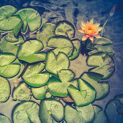 Lilies Royalty-Free and Rights-Managed Images - Pink Water Lily And Pads by Mr Doomits