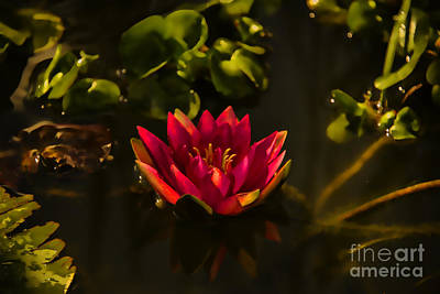 Flowers Photograph - Pink Water Lily by Gry Thunes