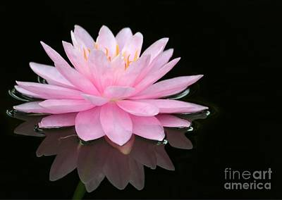 Photograph - Pink Water Lily In A Dark Pond by Sabrina L Ryan