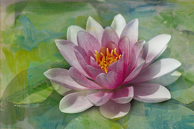 Pink Water Lily Art Print by Rebecca Cozart
