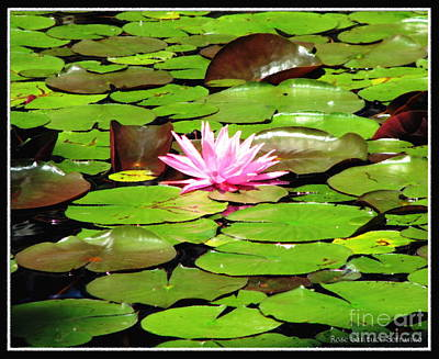 Photograph - Pink Waterlily With Oil Painting Effect by Rose Santuci-Sofranko