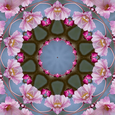 Pink Weeping Cherry Blossom Kaleidoscope Art Print by Kathy Clark