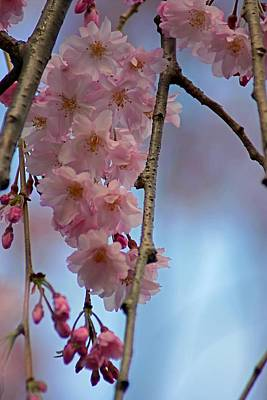 Photograph - Pink With Blue Sky by Beth Akerman