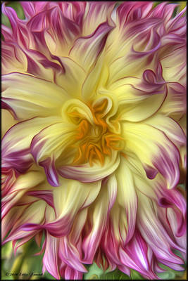 Photograph - Pink Yellow Dahlia by Erika Fawcett