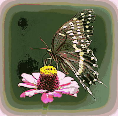 Photograph - Pink Zinnia Butterfly 1 by Sheri McLeroy
