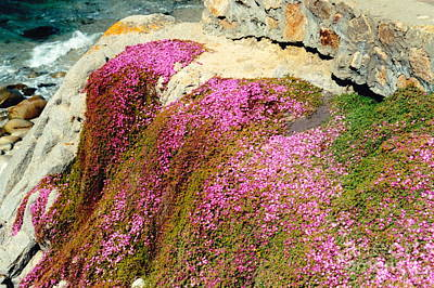 Photograph - Pinks On The Rocks by Phyllis Kaltenbach