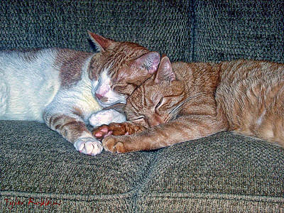 Photograph - Pinky And Hobo Greeting Card Friends For Life by Tyler Robbins