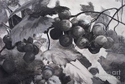 Pinot Noir Drawing - Pinot Noir by Mary Lynne Powers