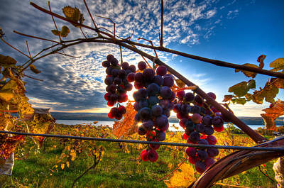 Pinot On The Vine Art Print by Walter Arnold