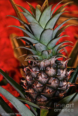 Photograph - Pint Sized Pineapple by Susan Herber