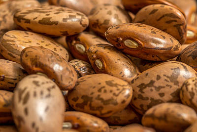 Photograph - Pinto Beans. by Gary Gillette