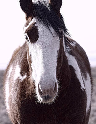 Forelock Photograph - Pinto Close Up 3707 by Tahnee-Wesley Grant