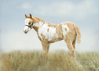 Pinto Horses Photograph - Pinto Filly by Betty LaRue