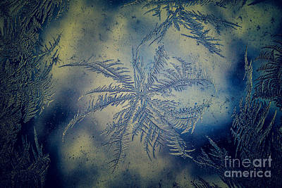 Photograph - Pinwheel Frost by Julie Clements