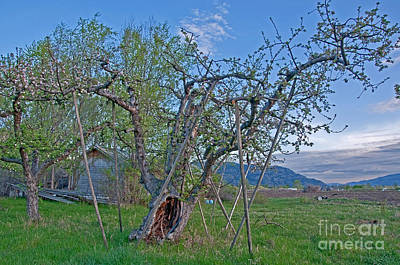 Photograph - Pioneer Planted Apple Orchard - First In Washington State by Valerie Garner