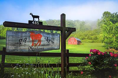 Pasture Rose Photograph - Pip Lynn Meadows by Debra and Dave Vanderlaan