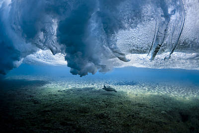 Under The Ocean Photograph - Turtle Turbulence by Sean Davey