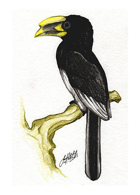 Piping Hornbill Original by Justin F C Miller