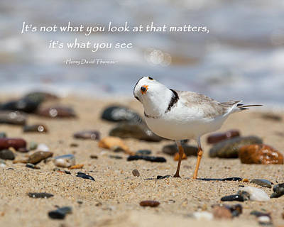 Thoreau Photograph - Piping Plover Quote by Bill Wakeley