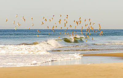 Photograph - Piping Plovers And Wave Breaking by Maureen E Ritter