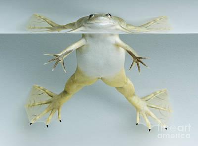 Photograph - Pippi Frogstocking by Dan Suzio