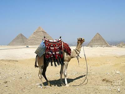 Piramides Y Kamel Art Print